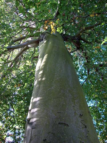 Una gota en el oc ano rbol jard n bot nico for Arboles jardin botanico