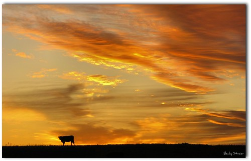 sunset sky orange clouds cow colorful digitalcameraclub naturepoetry justclouds mywinners colorphotoaward