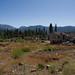 Angora Fire Survey Site H