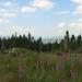 Coed-y-Brenin Landscape