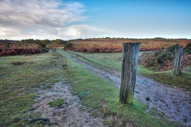New Forest Landscape - Leaving Pittswood