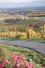 Bluemont Vineyard Vines 3