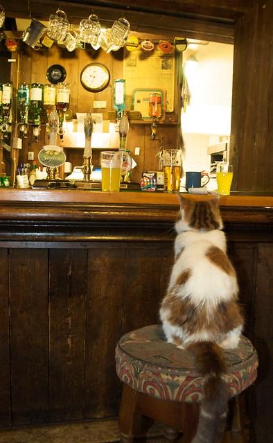 One beer, please!
