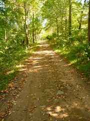Patriots Path Near Frelinghuysen Arboretum