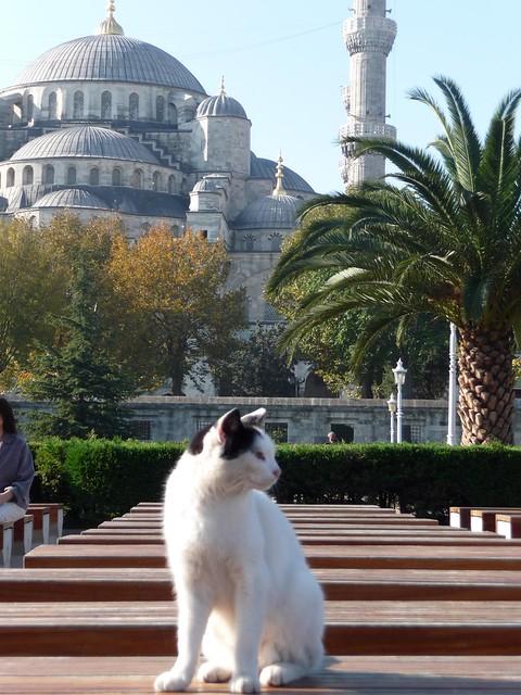 Sultanahmet Camii (Blue Mosque) Istanbul
