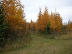 Groomed Trail - Autumn