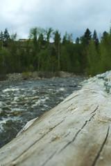 Fallen Log 2