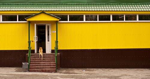 Yellow Dogs Go To Yellow Shops