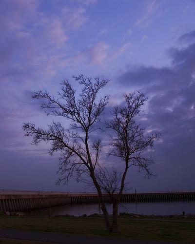 tree sunrise bluesky