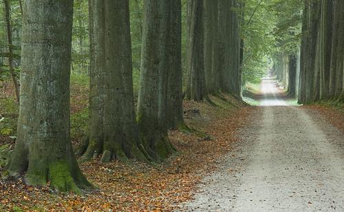 morning autumn trees light brussels sunlight silhouette forest sunrise woods belgium cast rays avenue teveuren