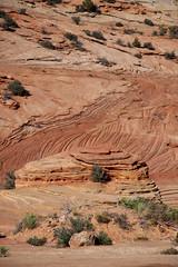 2. Zion National Park (263)