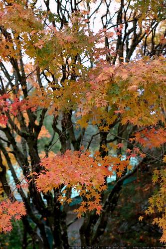 autumn leaves    MG 9154