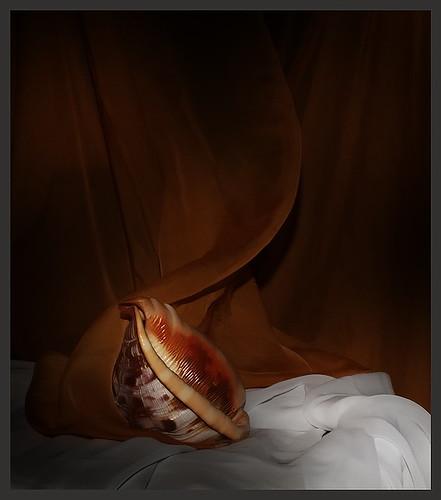 Surrealism(Nemo Birth)No.2