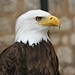Bald Eagle by Simon Willison