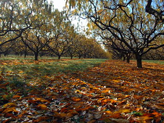 Fall in the orchards