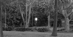 callum park