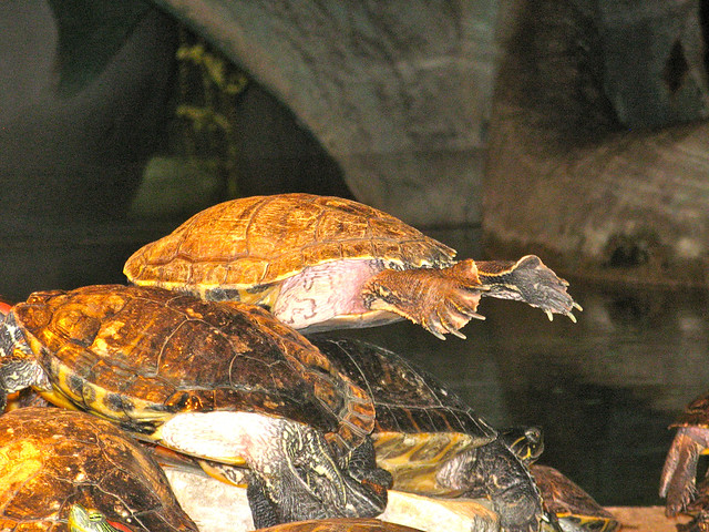 turtles under heat lamps at the city museum st louis 2009 0524 22. Black Bedroom Furniture Sets. Home Design Ideas