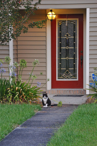 door blue light sunset red summer orange house green june yellow cat louisiana purple entrance kitty sidewalk batonrouge kitteh siding residence doormat planks 2009 woodpaneling woodpanels securitysign