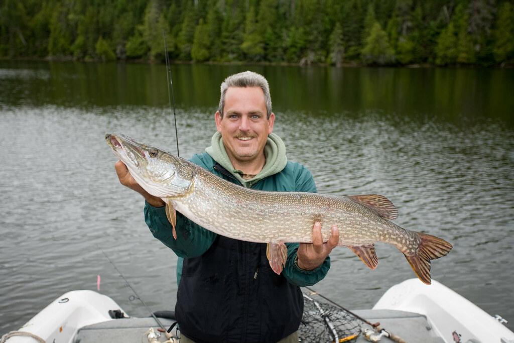Northern pike my alaskan fishing trip for Fishing for northern pike