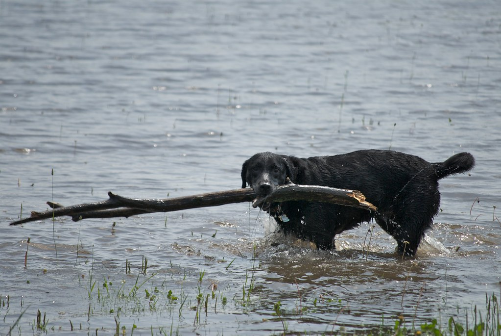 Hey Libby!  Don't you think that stick is a little big?