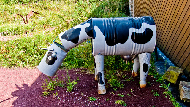Drole de vache flickr photo sharing - Image vache drole ...