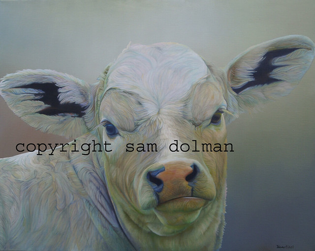 Mardy Cow