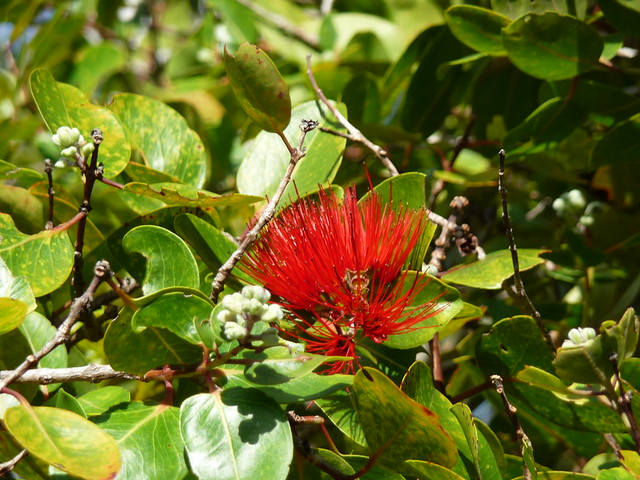 Hawaiian Silk Flowers - Greeting Cards and Wishes - Send free