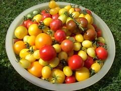 tomaten paprika 2008/2009