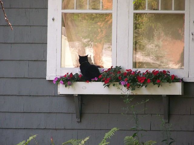 Cat Window Box Australia
