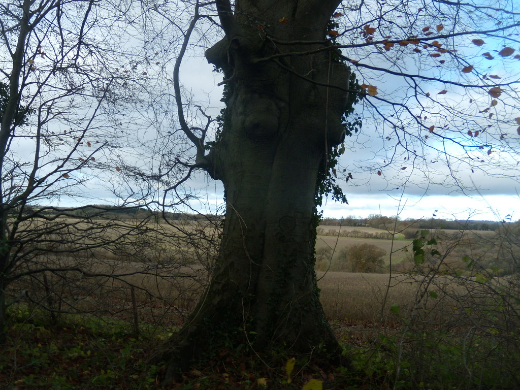Tree with view Overton to Whitchurch