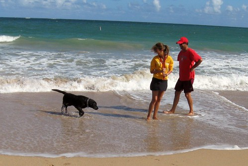 Couple and dog on the beach