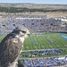 U.S. Air Force Academy mascot, a gyr falcon is perched above Falcon Stadium at the U.S. Air Force Academy in Colorado Springs, Colorado. (Photo courtesy USAFA)
