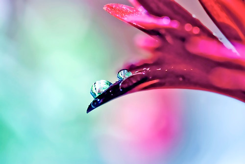 flower macro reflection water colors rain rainbow bokeh sony drop tamron 90mm inspiredbylove
