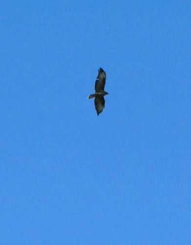 Buzzards circled over head and it wasn't even lunchtime