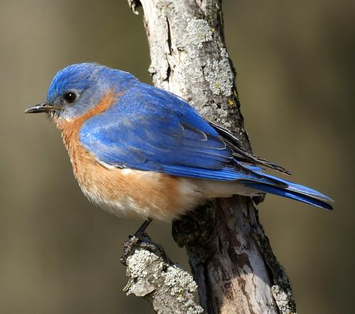NJ Bird Photos Birds Of New Jersey December 12 2010
