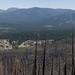 Angora Fire Survey Site A