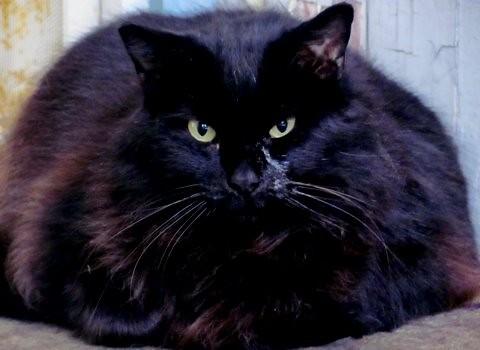 Big Fat Black Cat 92
