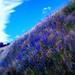 NZ Rainway Ride