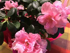 47/365: Springtime on my Table