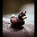 Kustum Kultur 2009-176 by Lorryson