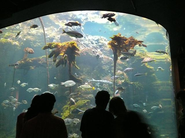 Aquarium California Academy Of Sciences San Francisco