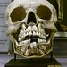 Child's skull with baby teeth and adult teeth, Hunterian Museum, London by Stefan Schäfer