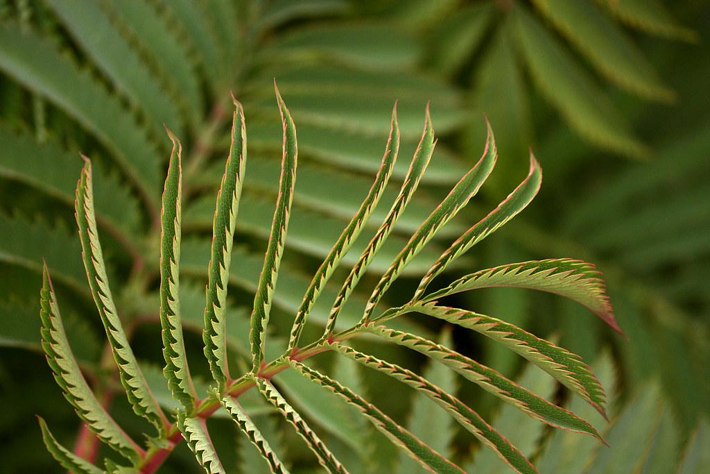 Green Rhythm 2 | An unknown plant, hard to call such lush br