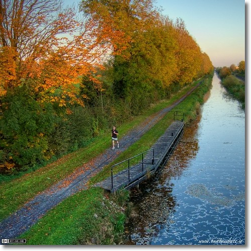 An Autumn Evening on the Royal Canal