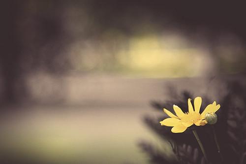usa flower green yellow boston closeup canon vintage ma weed massachussetts alienskin ef24105l t1i