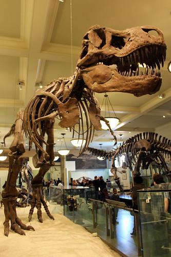 NYC – AMNH: Hall of Saurischian Dinosaurs – Tyrannosaurus Rex