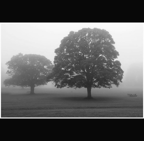 Moody and Misty Tree View - Camperdown Scotland