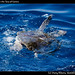 Sea Turtle in the Sea of Cortez