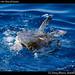Sea Turtle in the Sea of Cortez