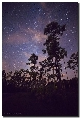 Everglades Night Sky